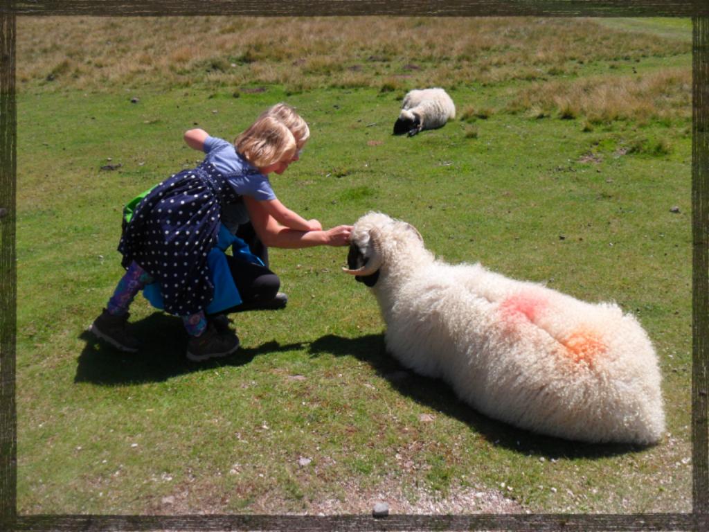 Schafe finde es schön wenn man sie streichelt