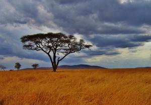 Weites Land - Tansania