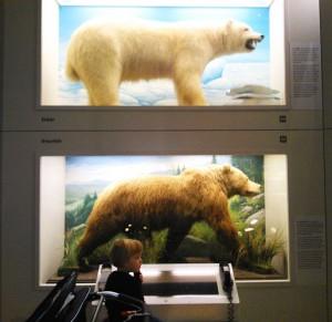 Museum Mensch und Natur - ideal für kleine Entdecker